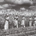 World War II and  Prisoners of War in Rosenberg