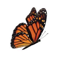200-butterfly