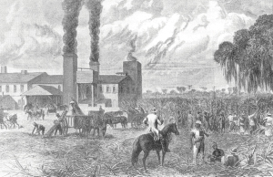 Although sugar production declined during the Civil War, field hands continued to cut the cane stalks and cart them to the sugar mill so operations could remain at a profitable level.